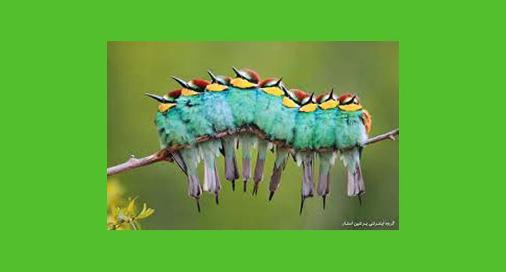 مهربانی پرندگان1.jpg