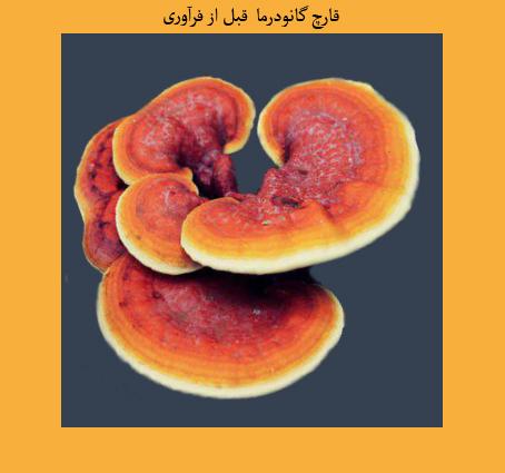مقاله علمی پژوهشی قارچ گانودرما