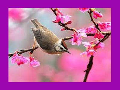 بلبلا از عشق گل پروا مکن