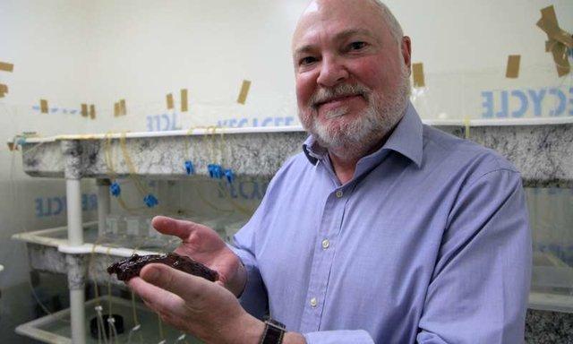 انتقال خاطرات یک حلزون به حلزون دیگر توسط محققان آمریکایی