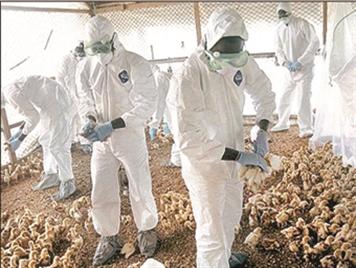 آنفولانزای پرندگان، بیماری هزار چهره